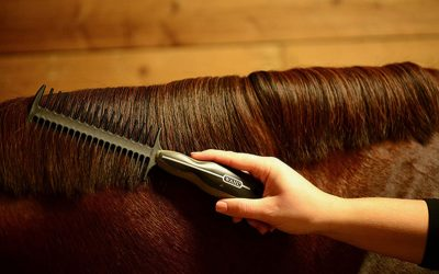 The Best Equine Wide Tooth Mane-Combs