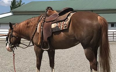 The Best Western Saddle Pads