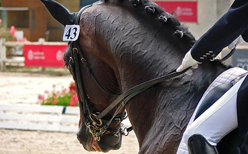 The Best Equine Double Bridles