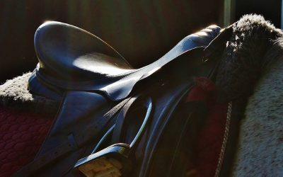 The Best Dressage Saddles + Buying Guide