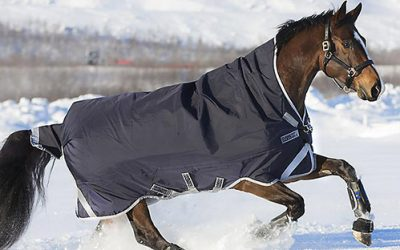 Best Horse Blankets in 2020 – Turnout & Stable